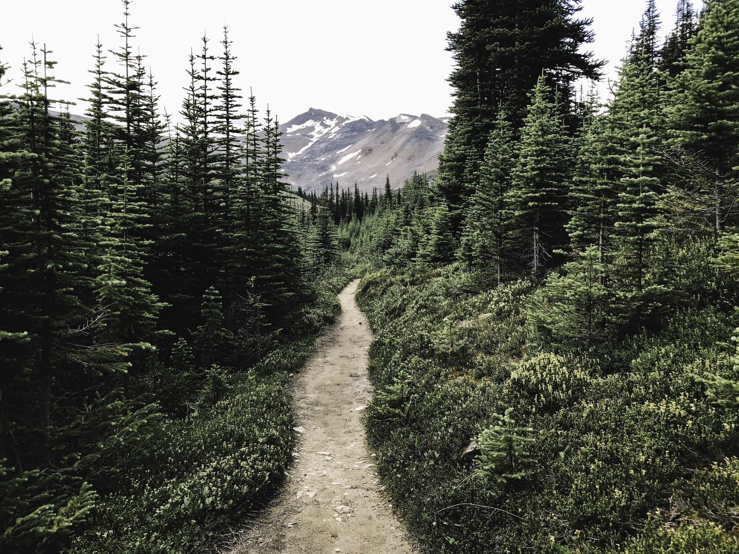 Hiking the Skyline Trail | Beyond Ordinary Guides-100.jpg