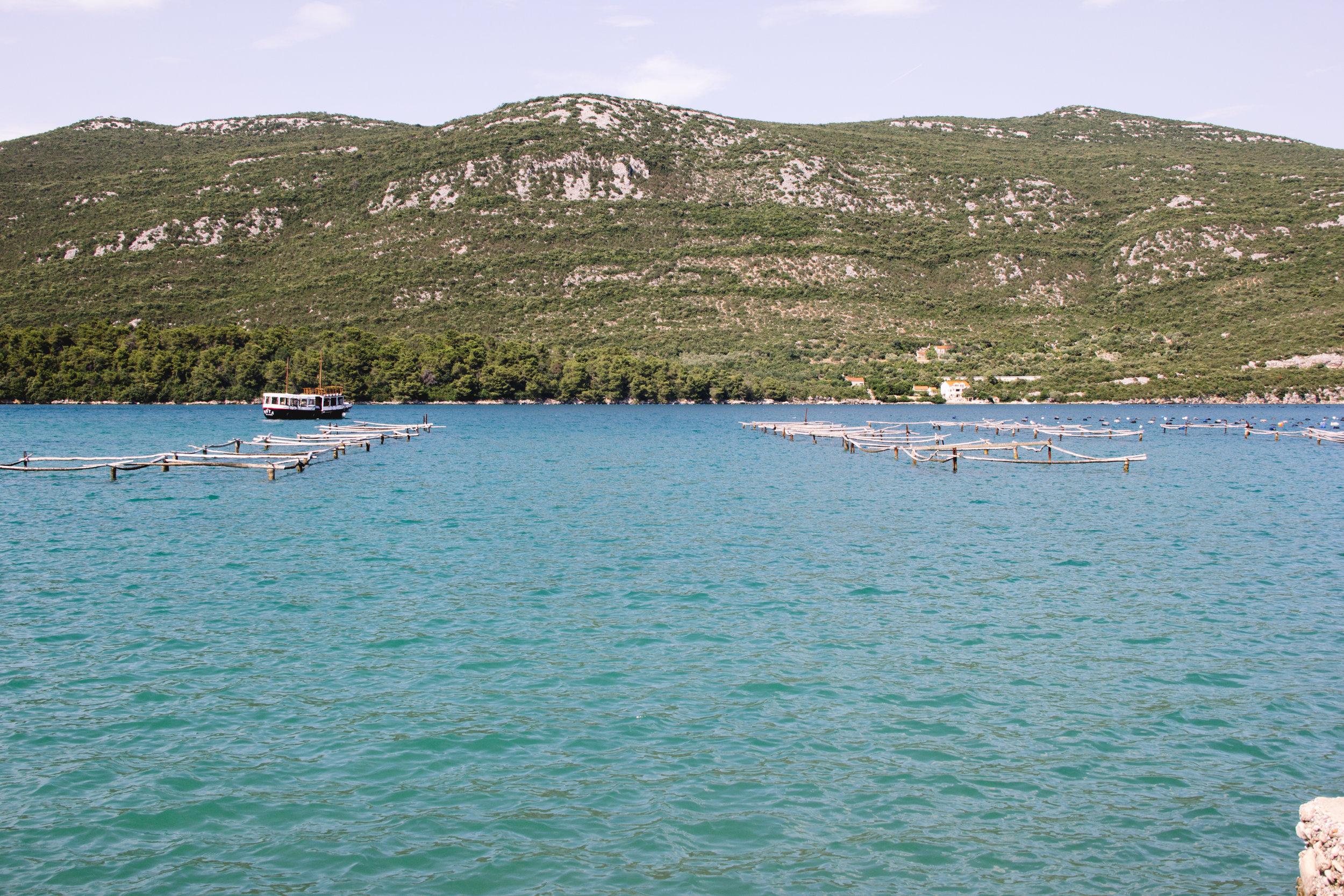 oysters in ston, croatia.jpg
