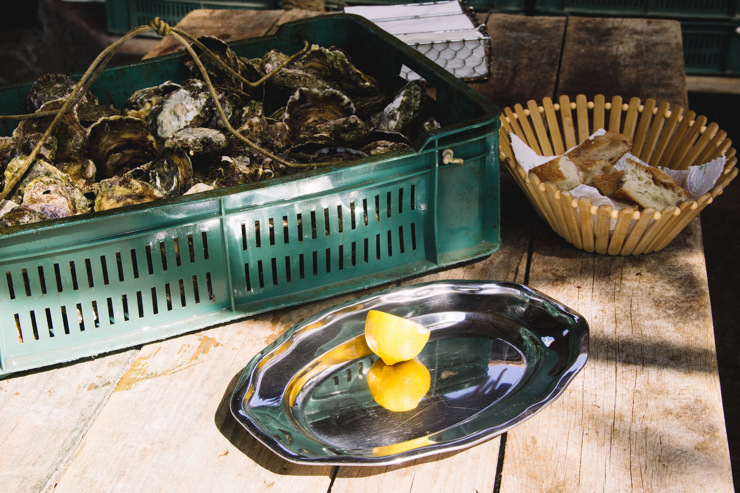 oysters in ston, croatia-5.jpg