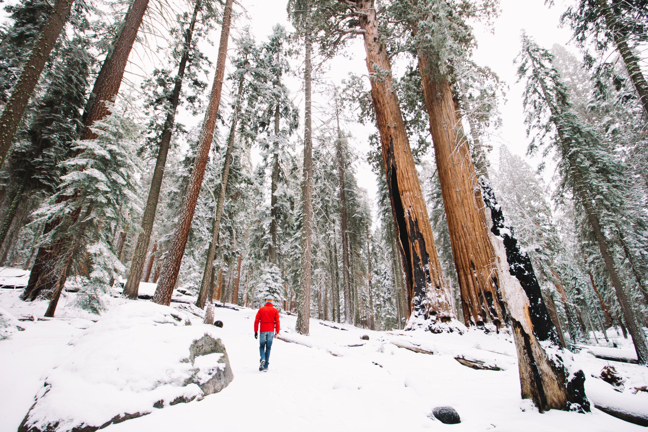 sequoia national park-162.jpg