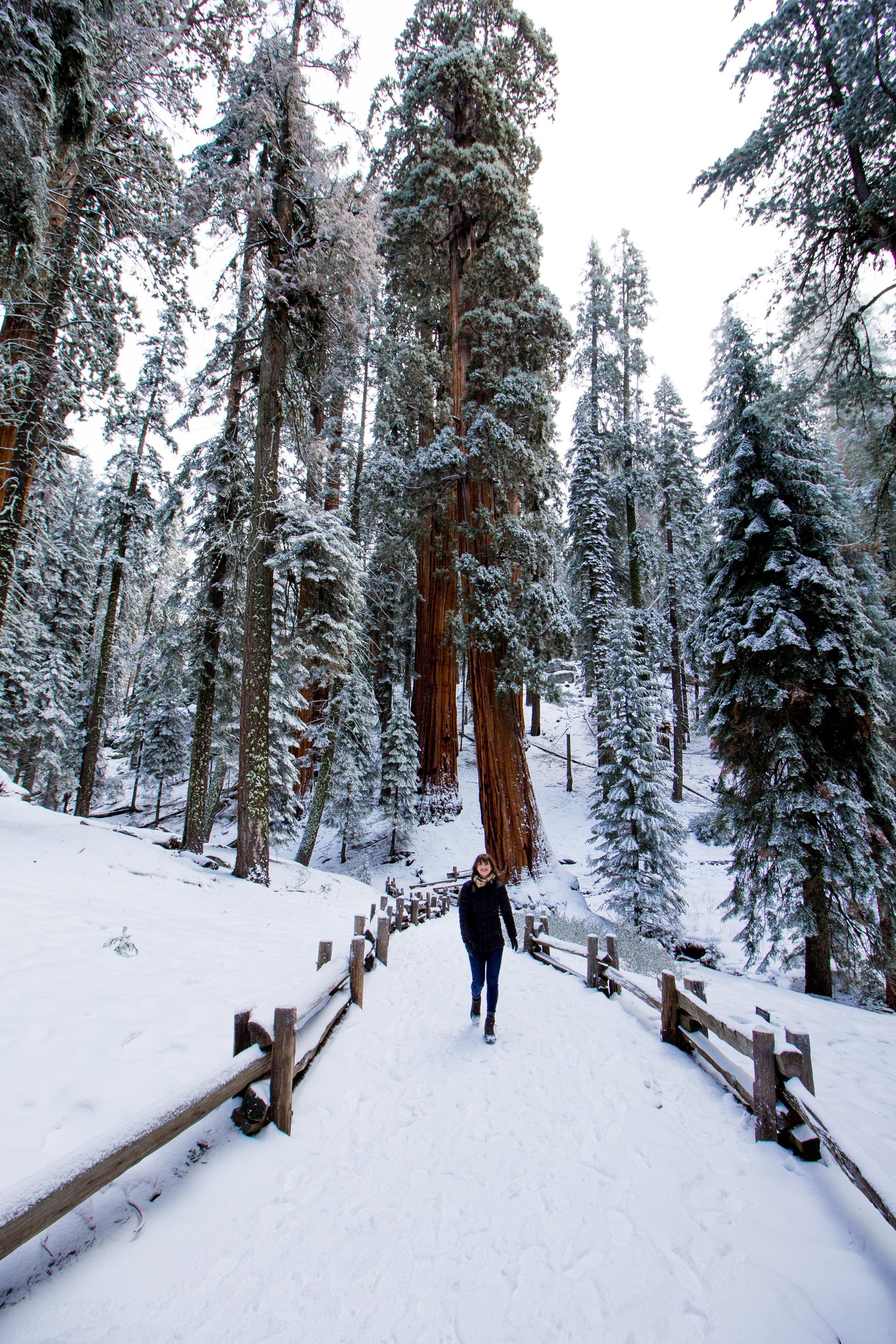 sequoia national park-115.jpg