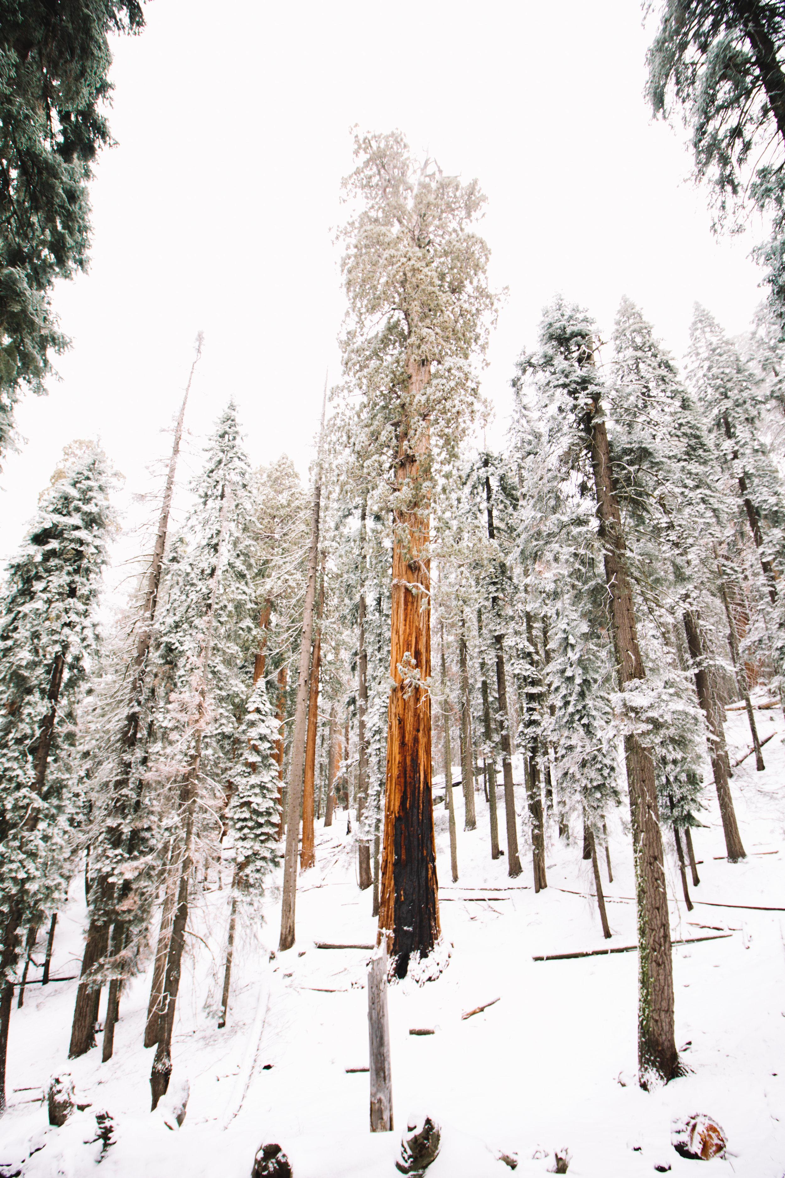 sequoia national park-157.jpg