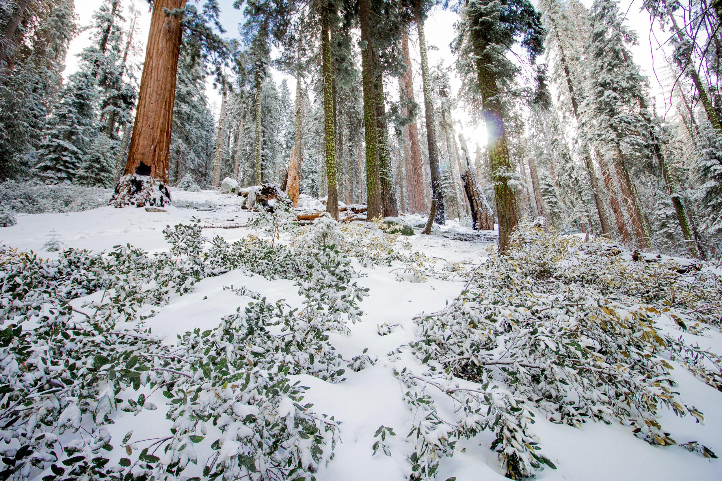 sequoia national park-142.jpg