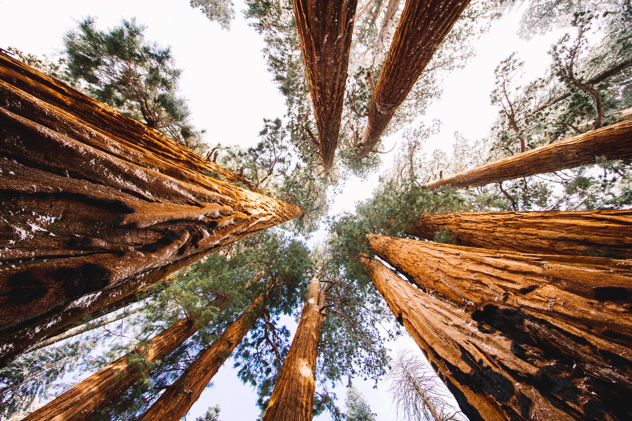 sequoia national park-201.jpg