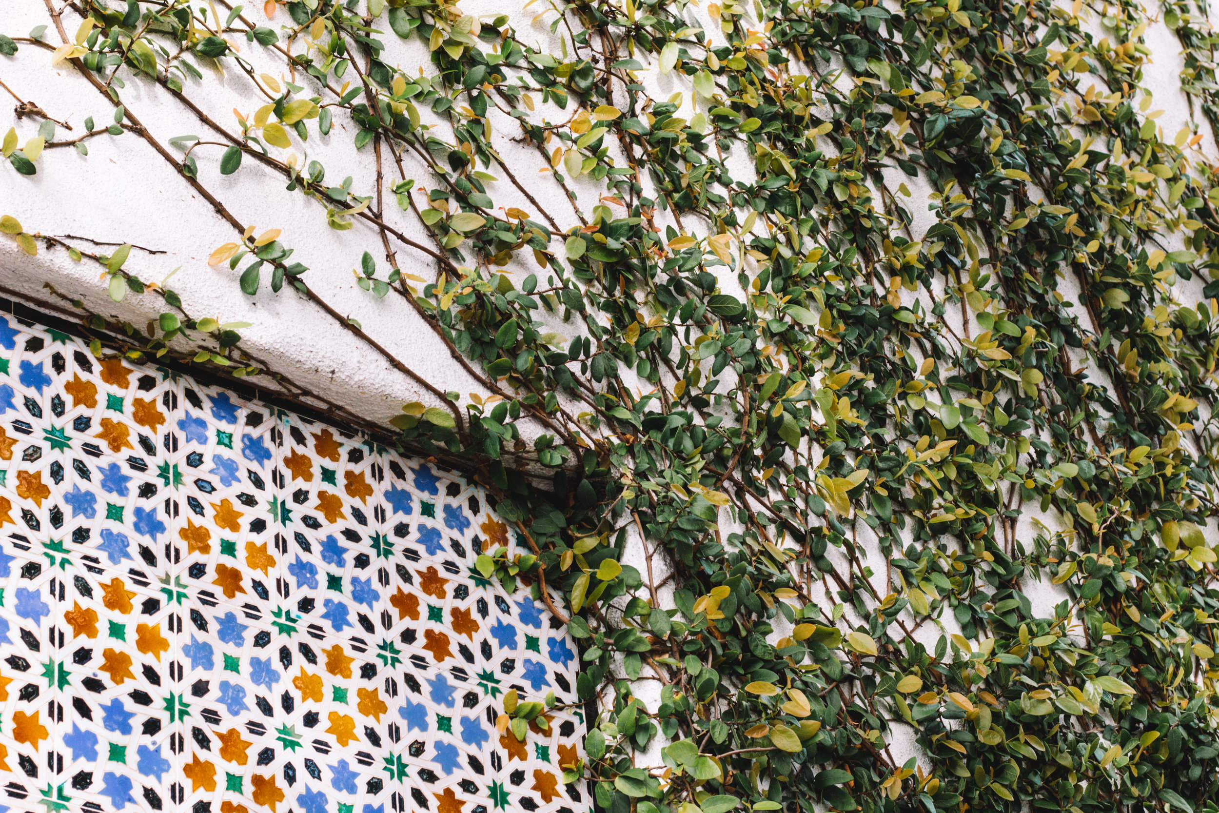 Mexican Tile and Ivy in Carmel, California | Beyond Ordinary Guides