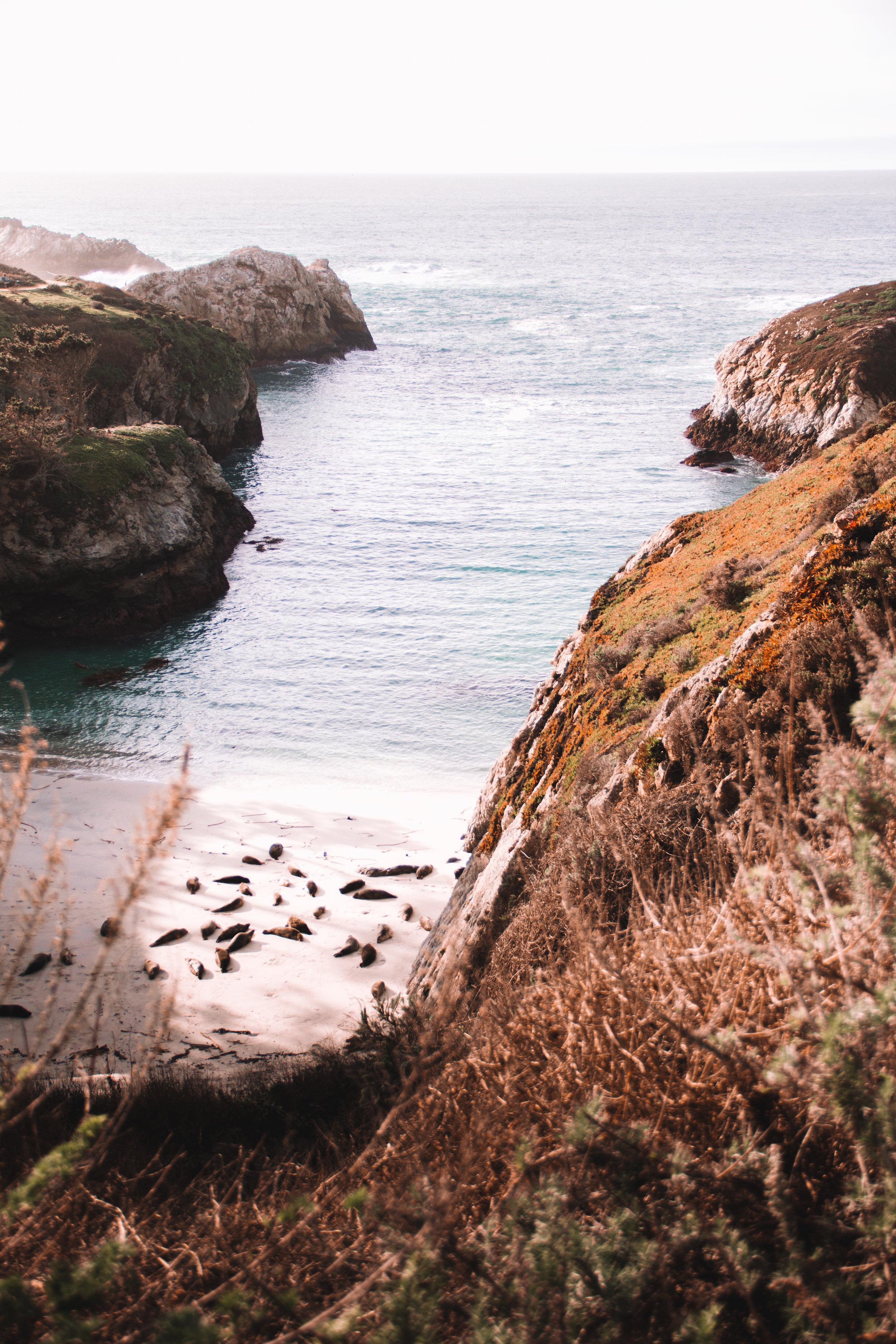 Point Lobos harbor seals | Carmel, CA via Beyond Ordinary Guides