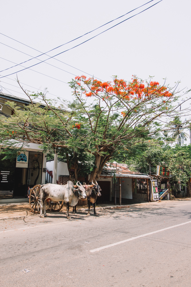 A Guide to the Laid Back Surf Town of Arugam Bay | Sri Lanka-5.jpg