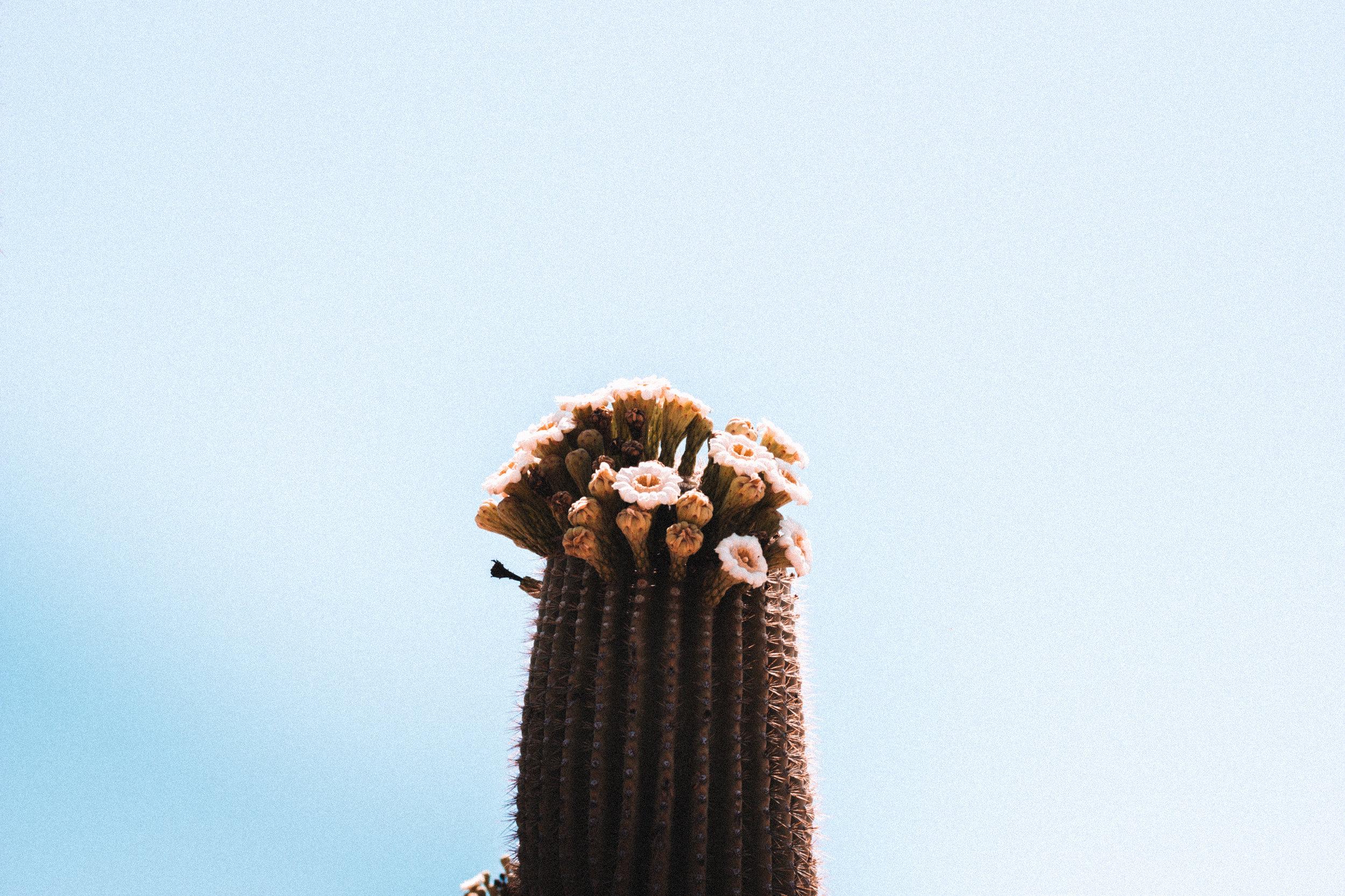 Sabino Canyon, Tucson-11.jpg