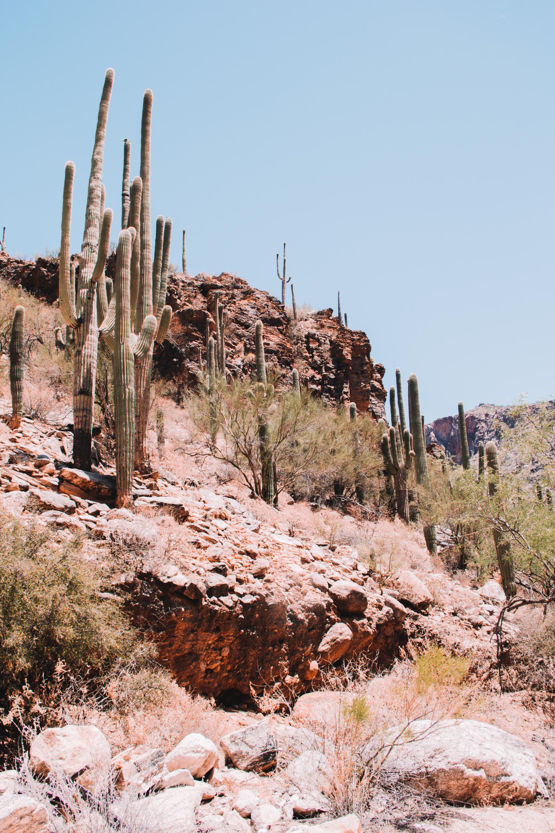 Sabino Canyon, Tucson-44.jpg