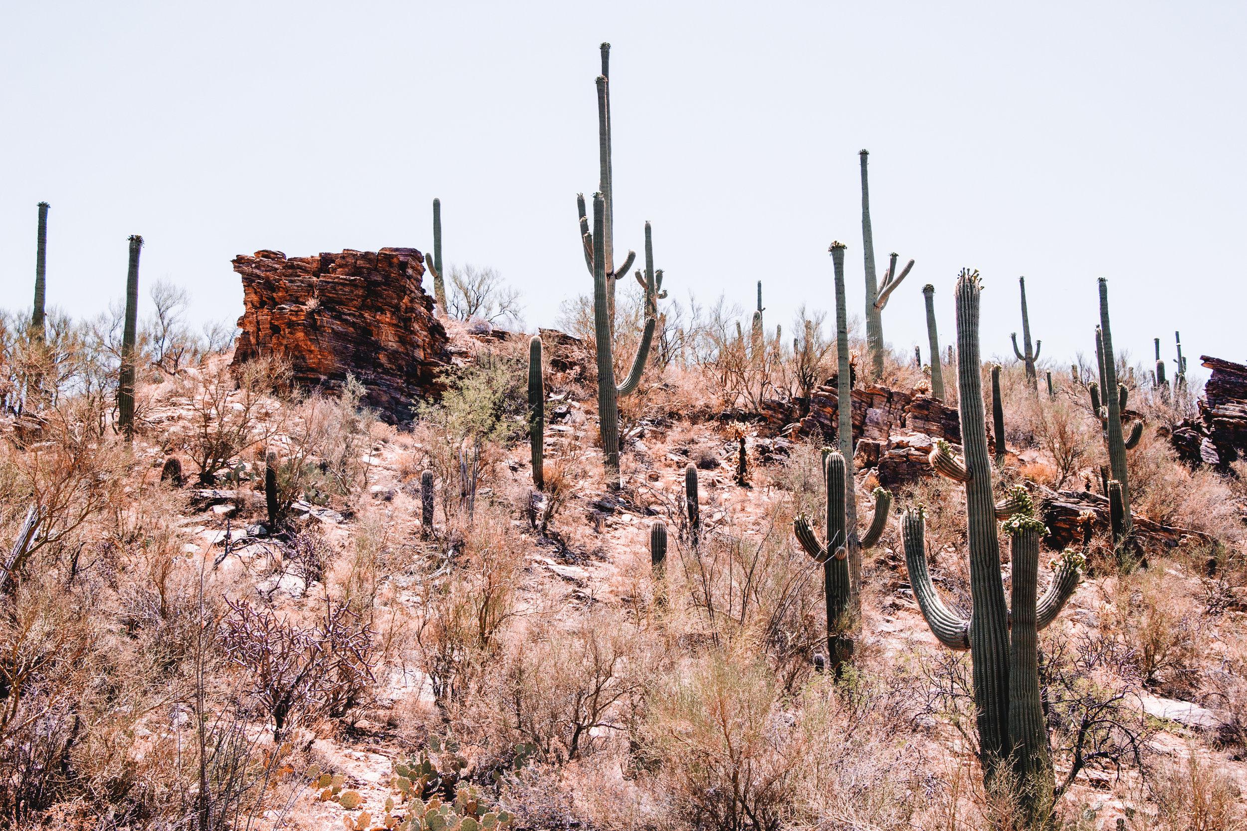 Sabino Canyon, Tucson-28.jpg