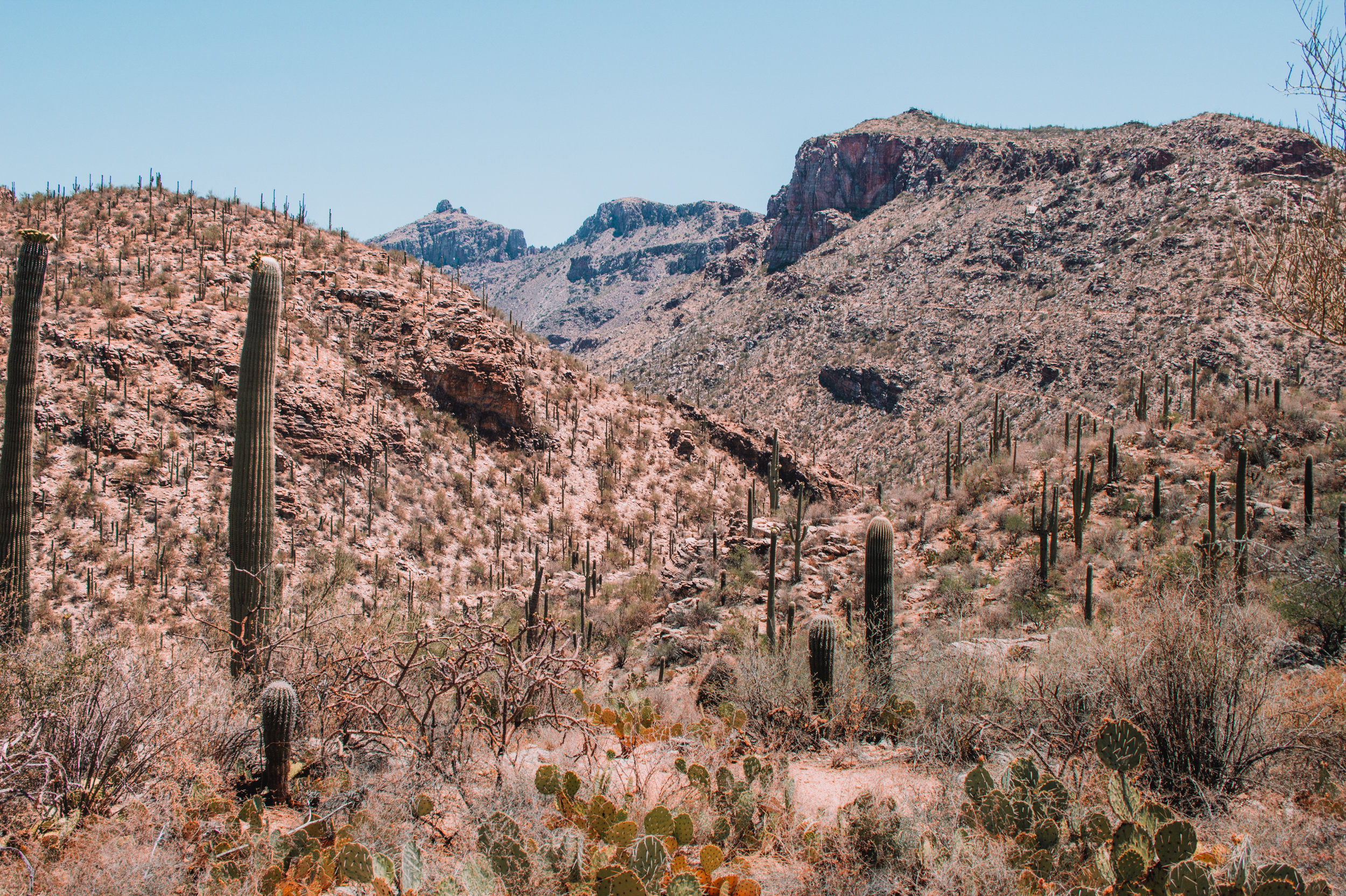 Sabino Canyon, Tucson-32.jpg