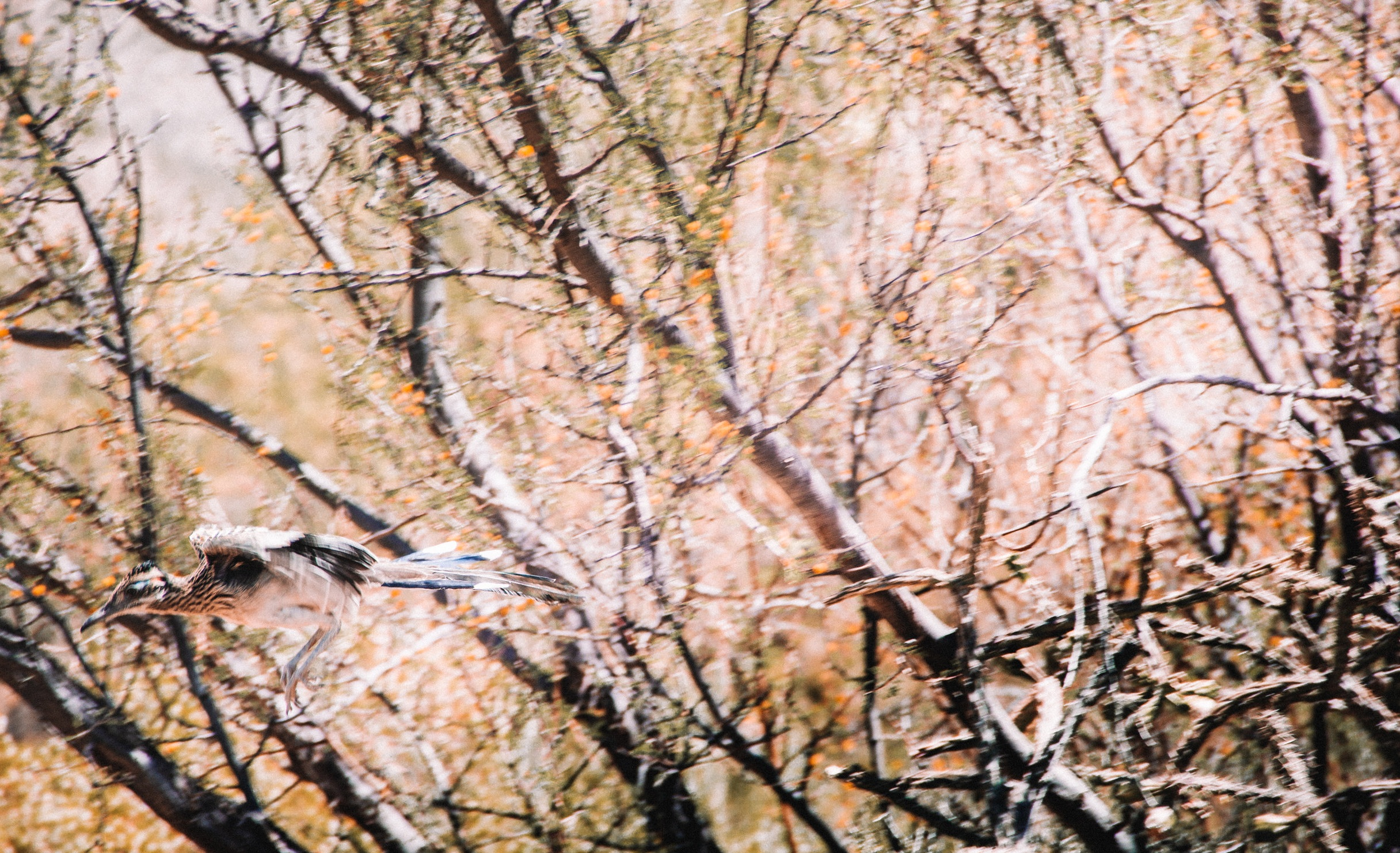 Sabino Canyon, Tucson-6.jpg