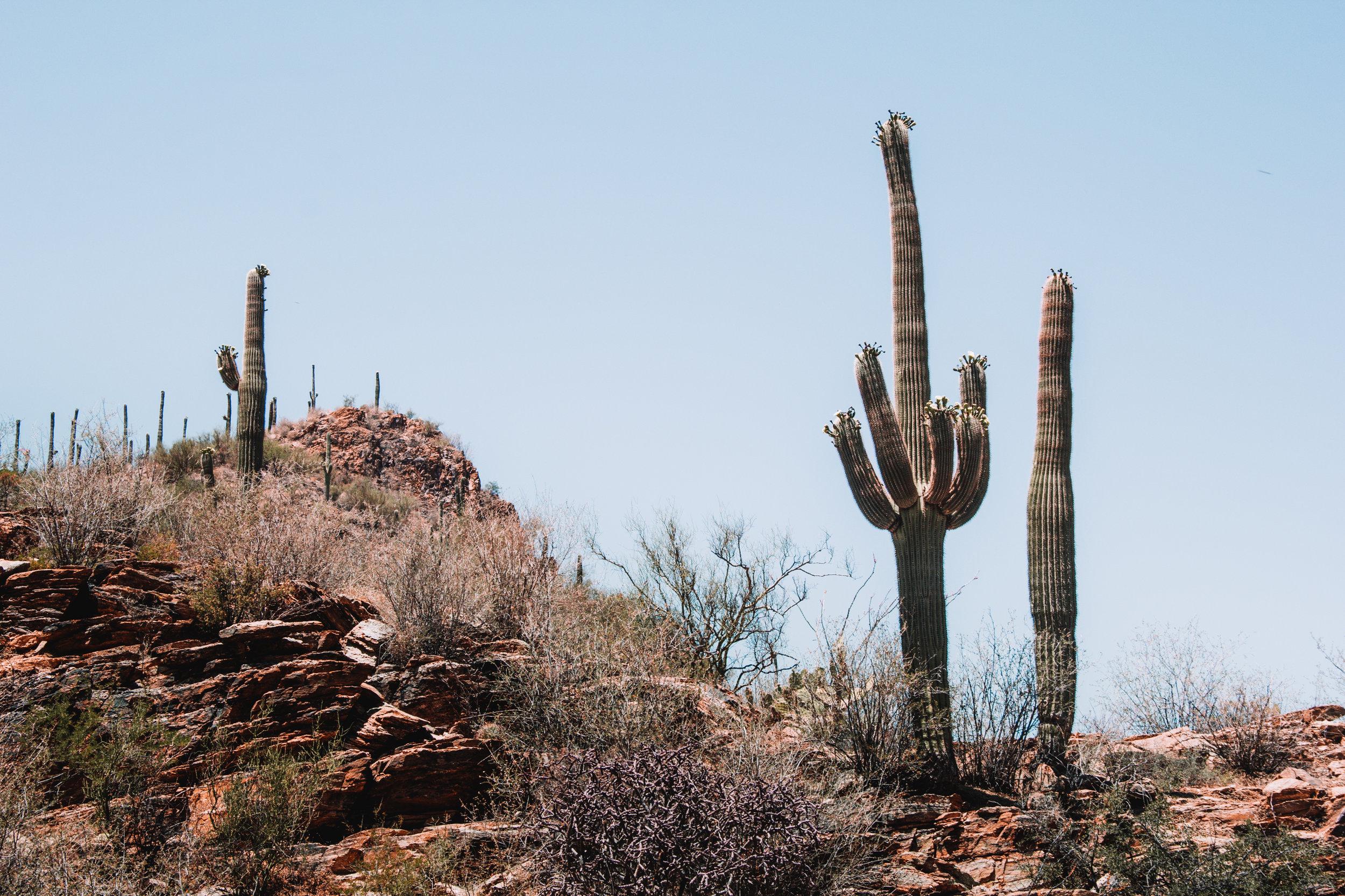Sabino Canyon, Tucson-35.jpg