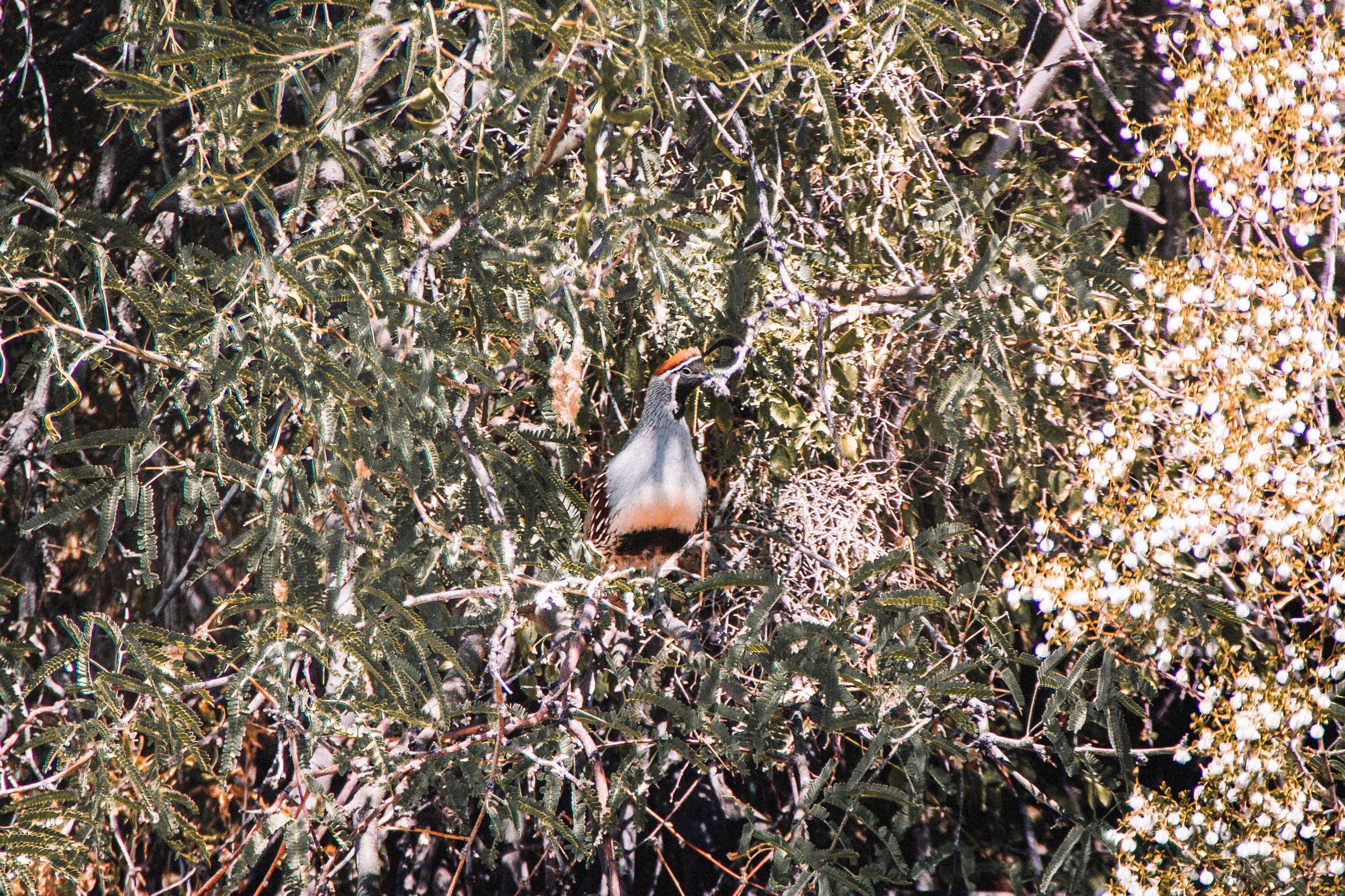Sabino Canyon, Tucson-4.jpg