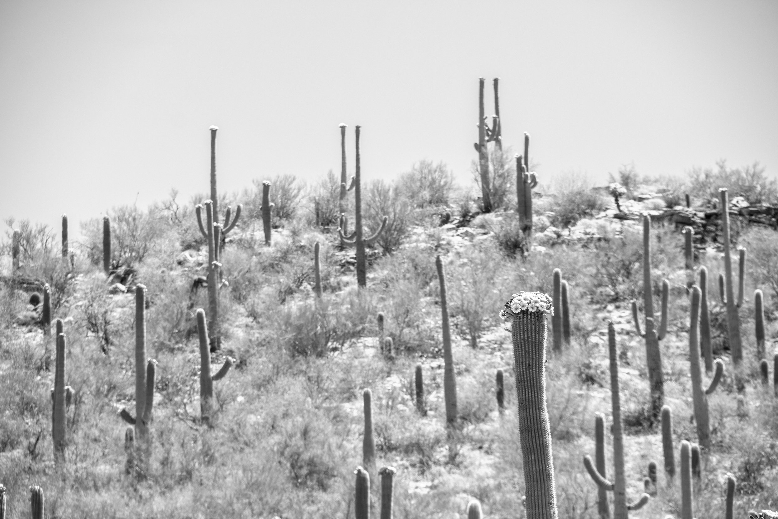Sabino Canyon, Tucson-17.jpg