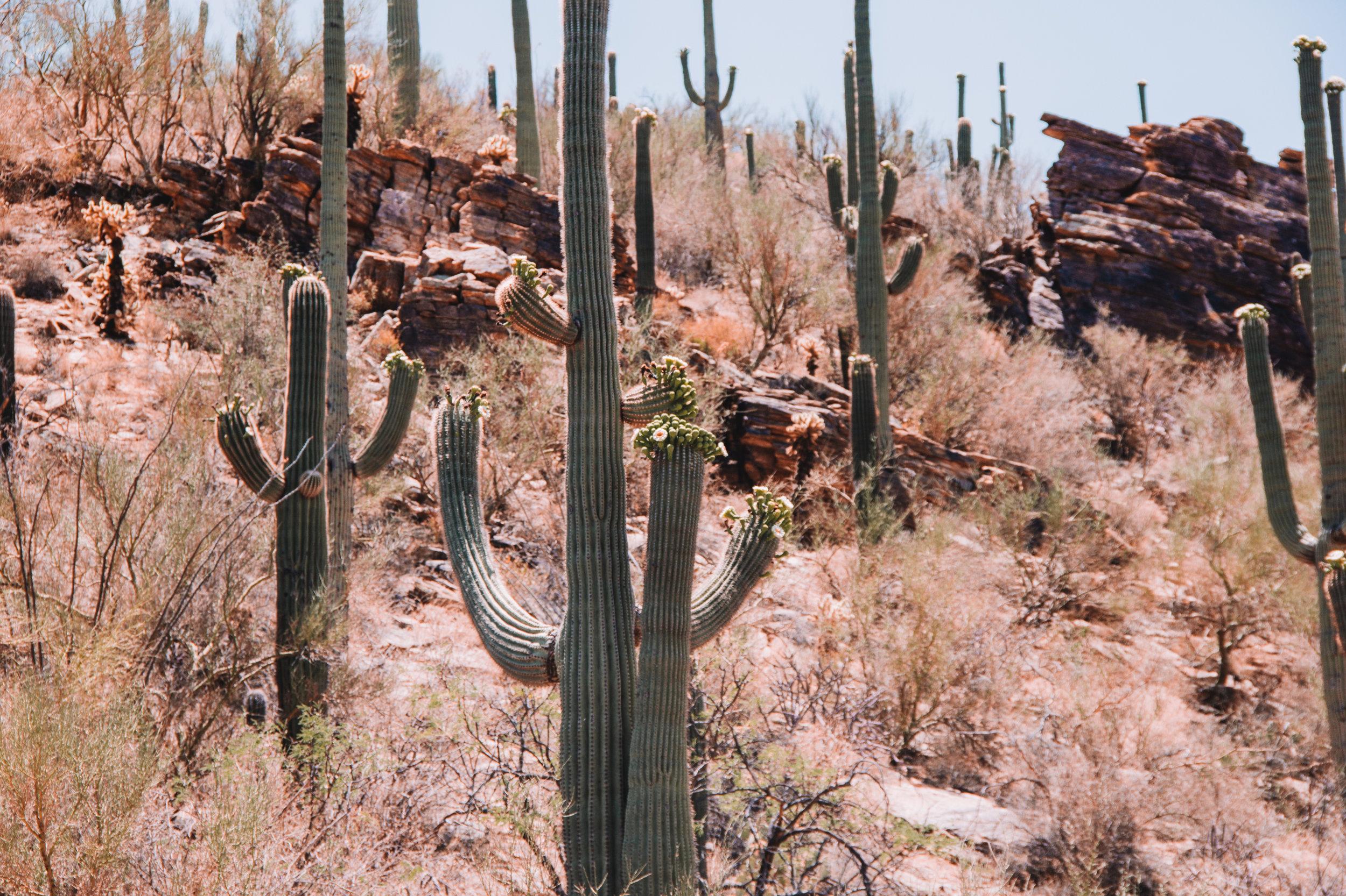 Sabino Canyon, Tucson-27.jpg