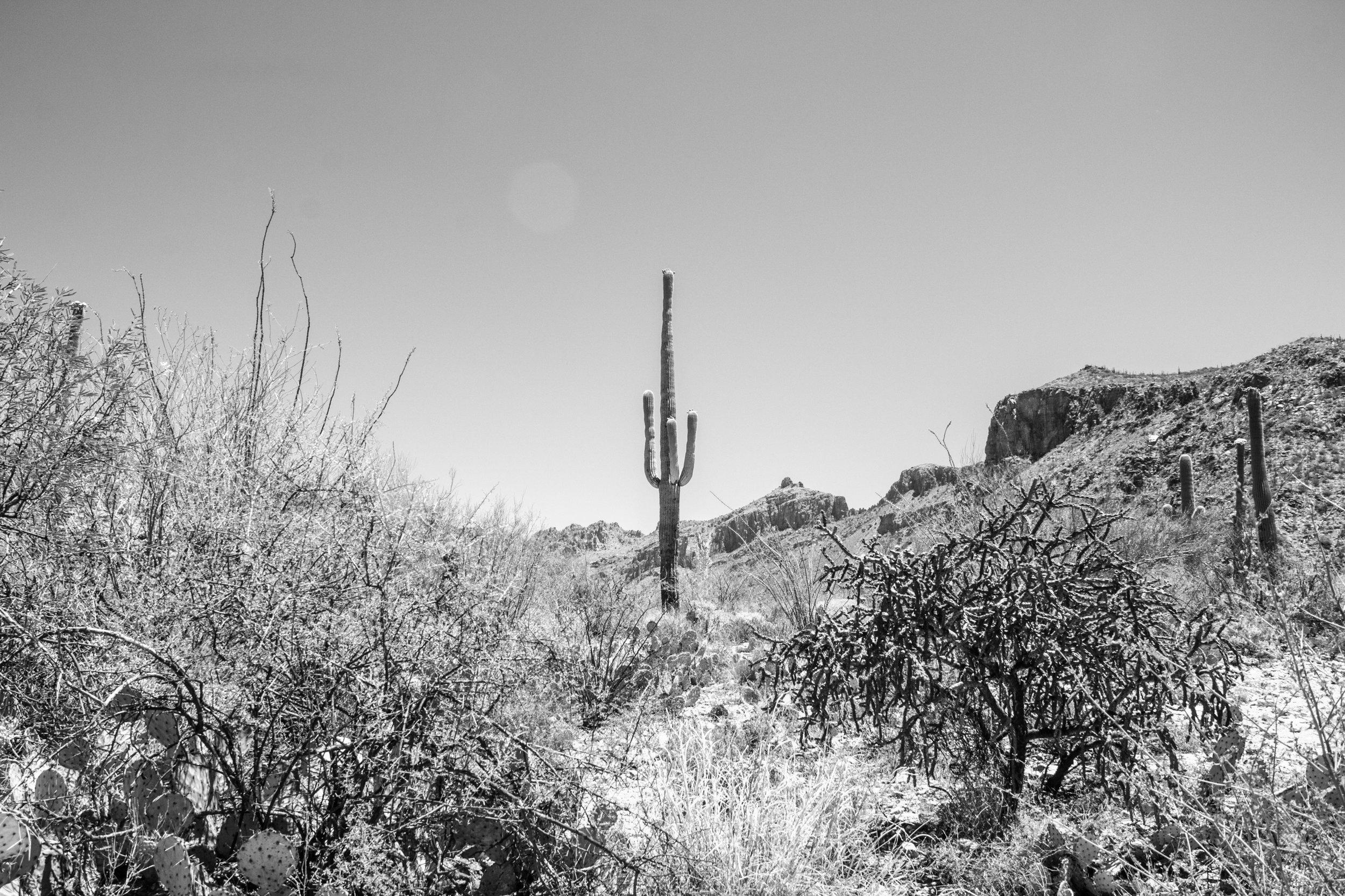 Sabino Canyon, Tucson-29.jpg