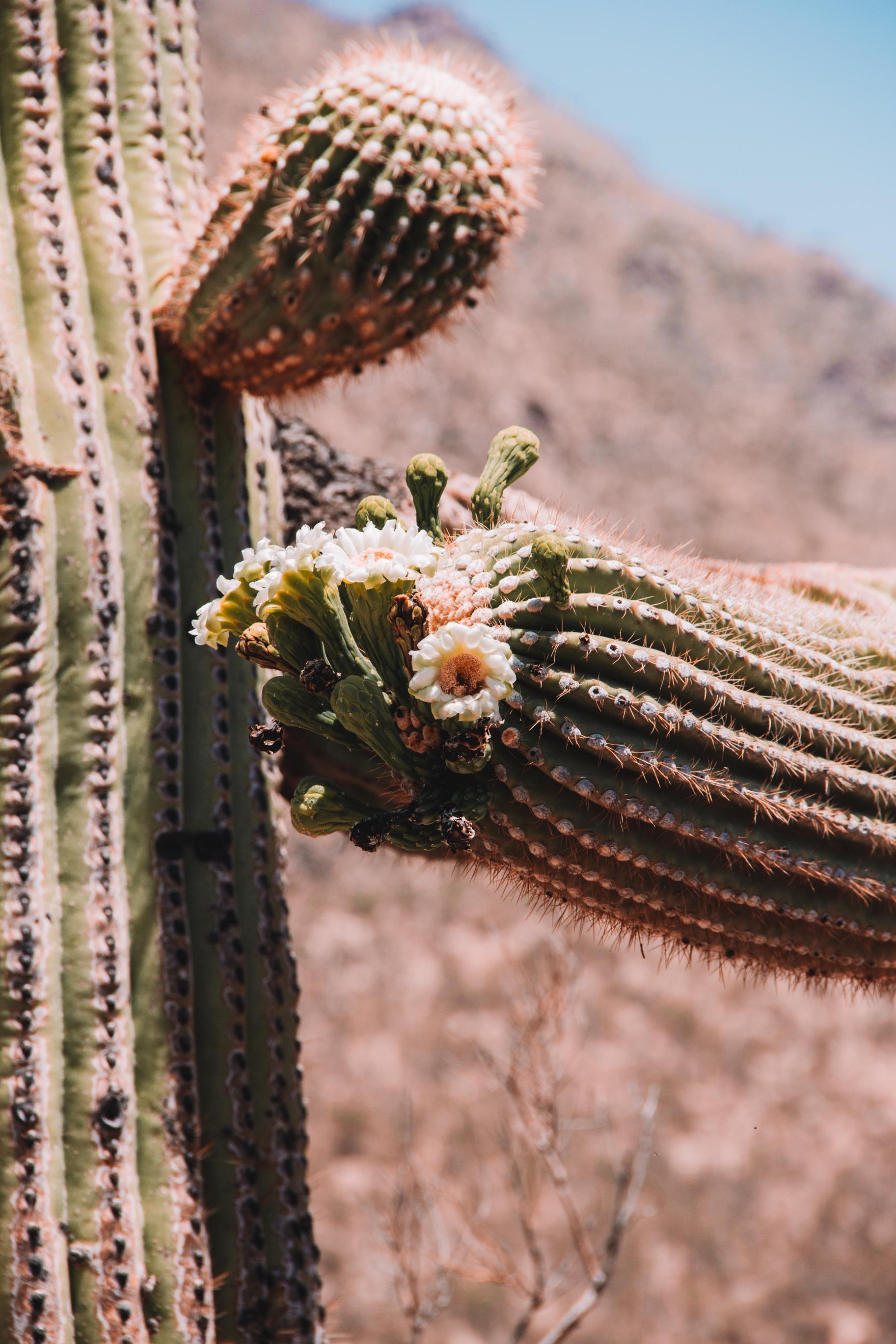 Sabino Canyon, Tucson-34.jpg