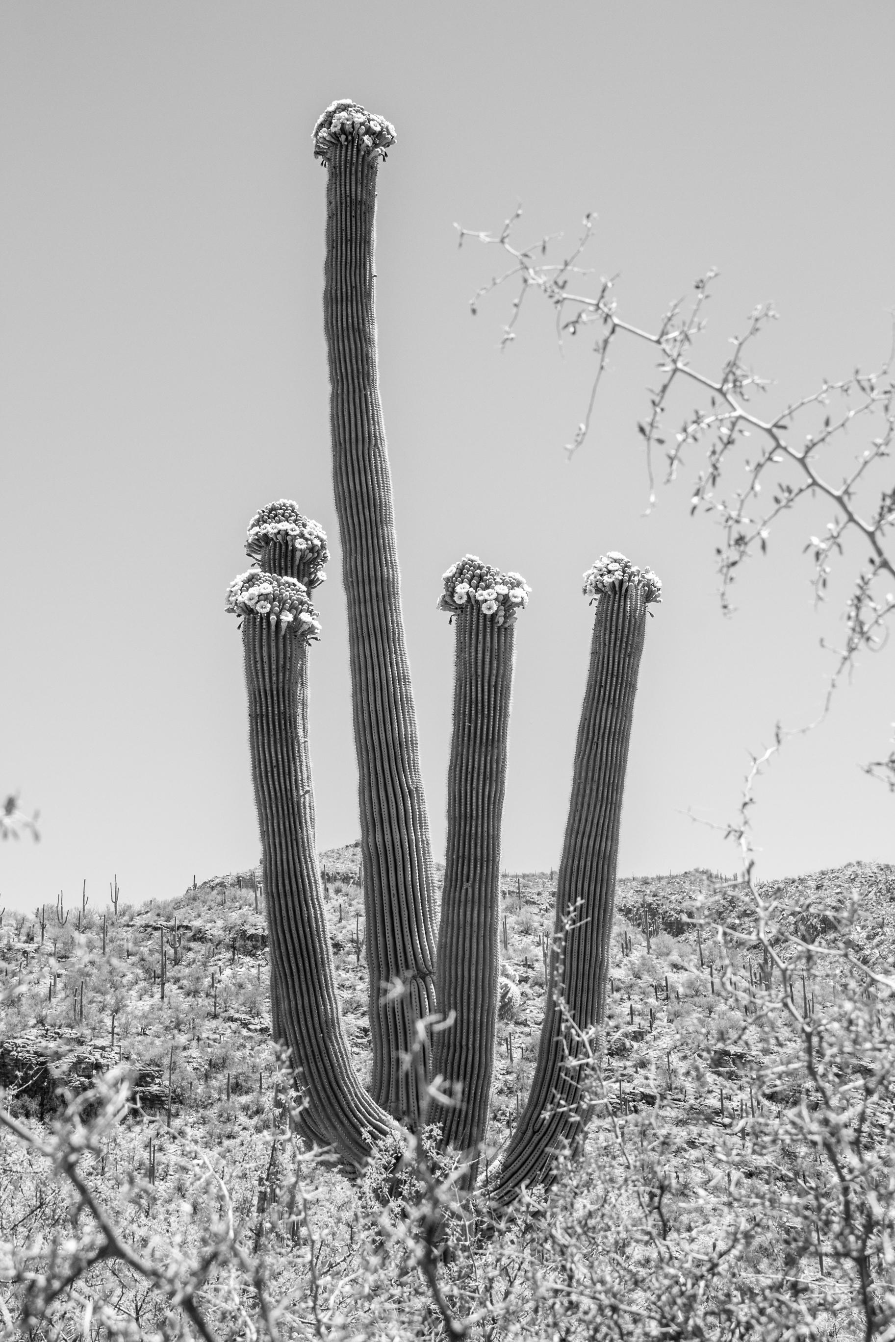 Sabino Canyon, Tucson-41.jpg