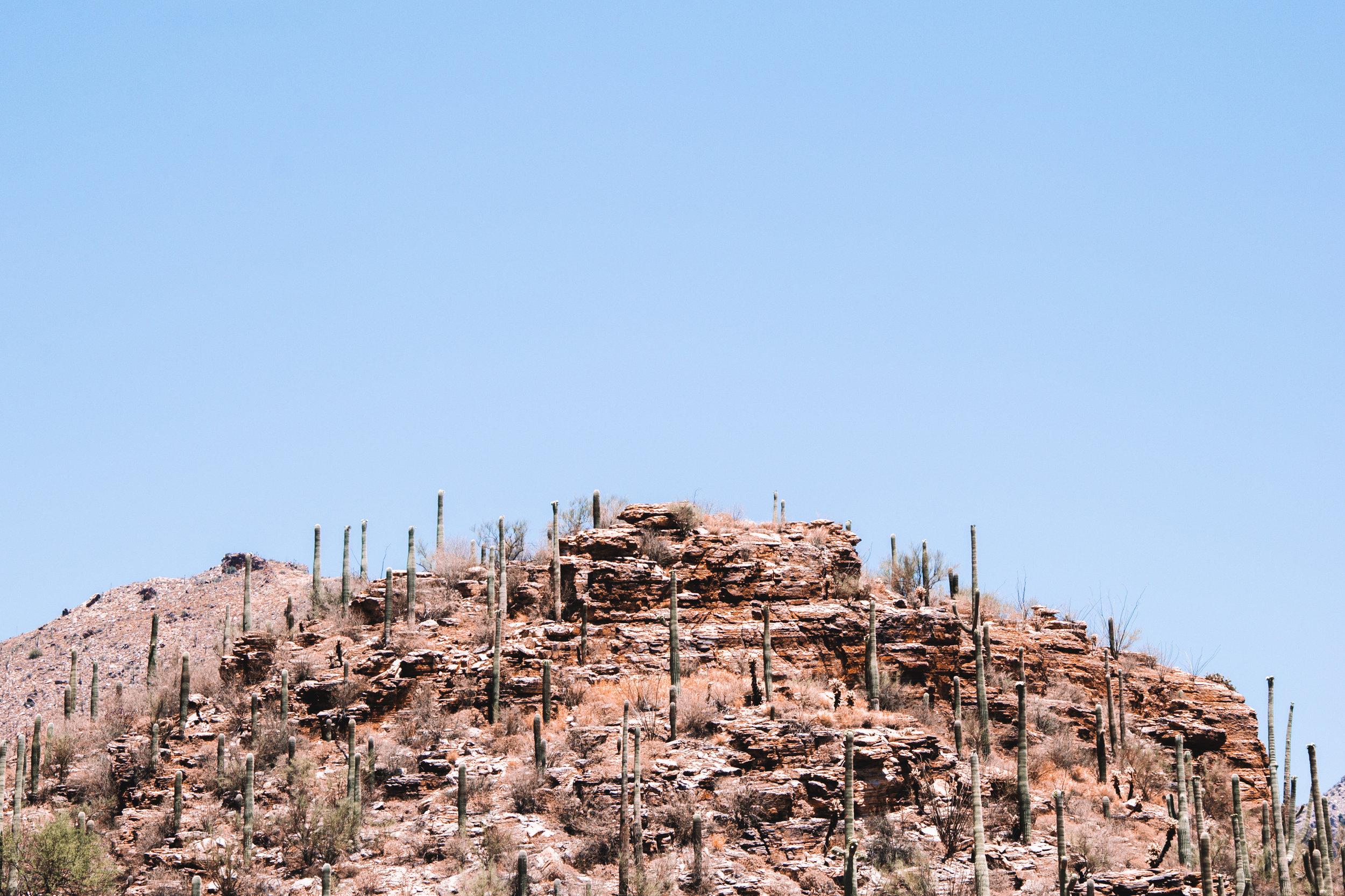 Sabino Canyon, Tucson-37.jpg