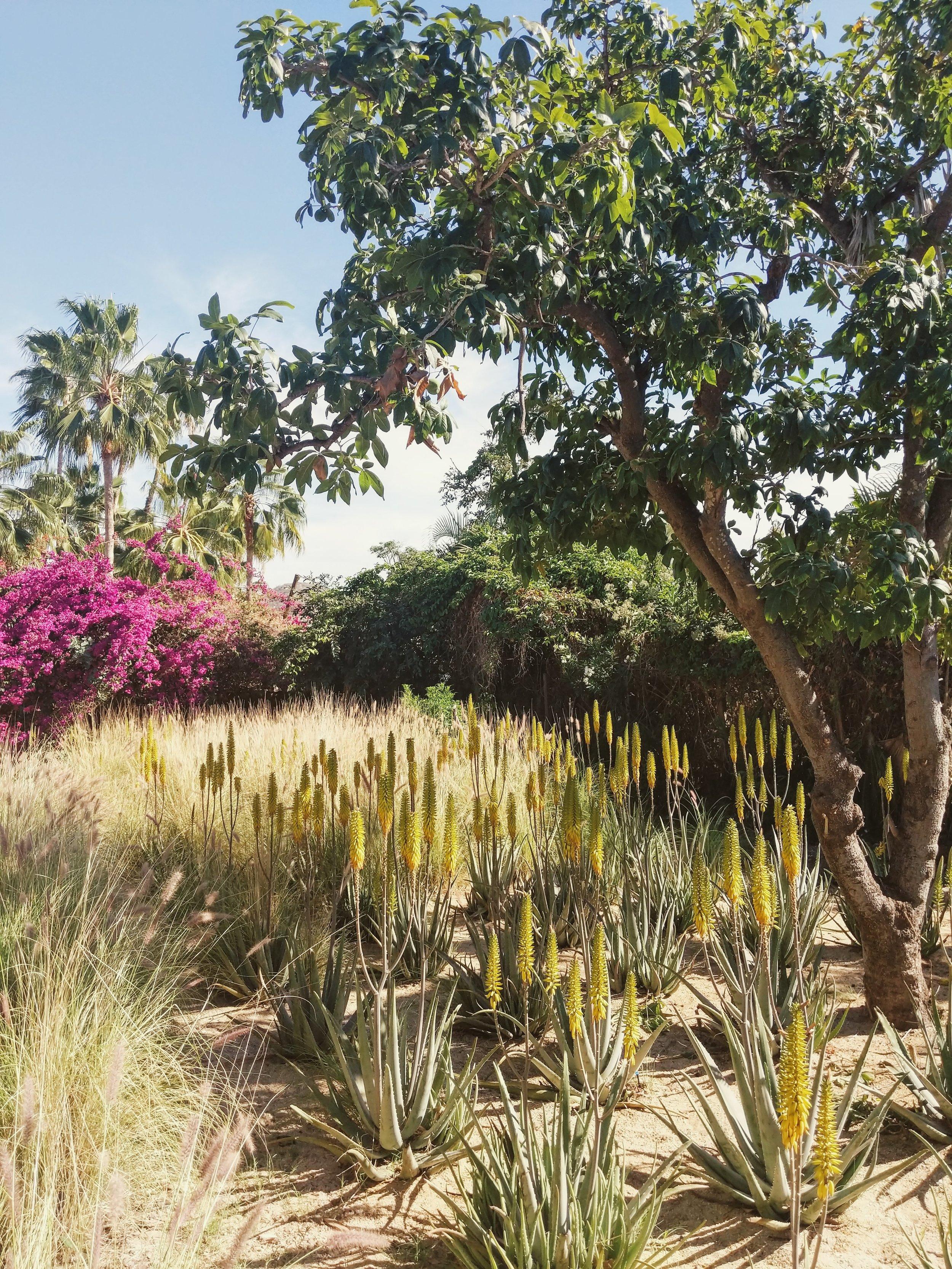 Bleu   Hidden Garden, Todos Santos