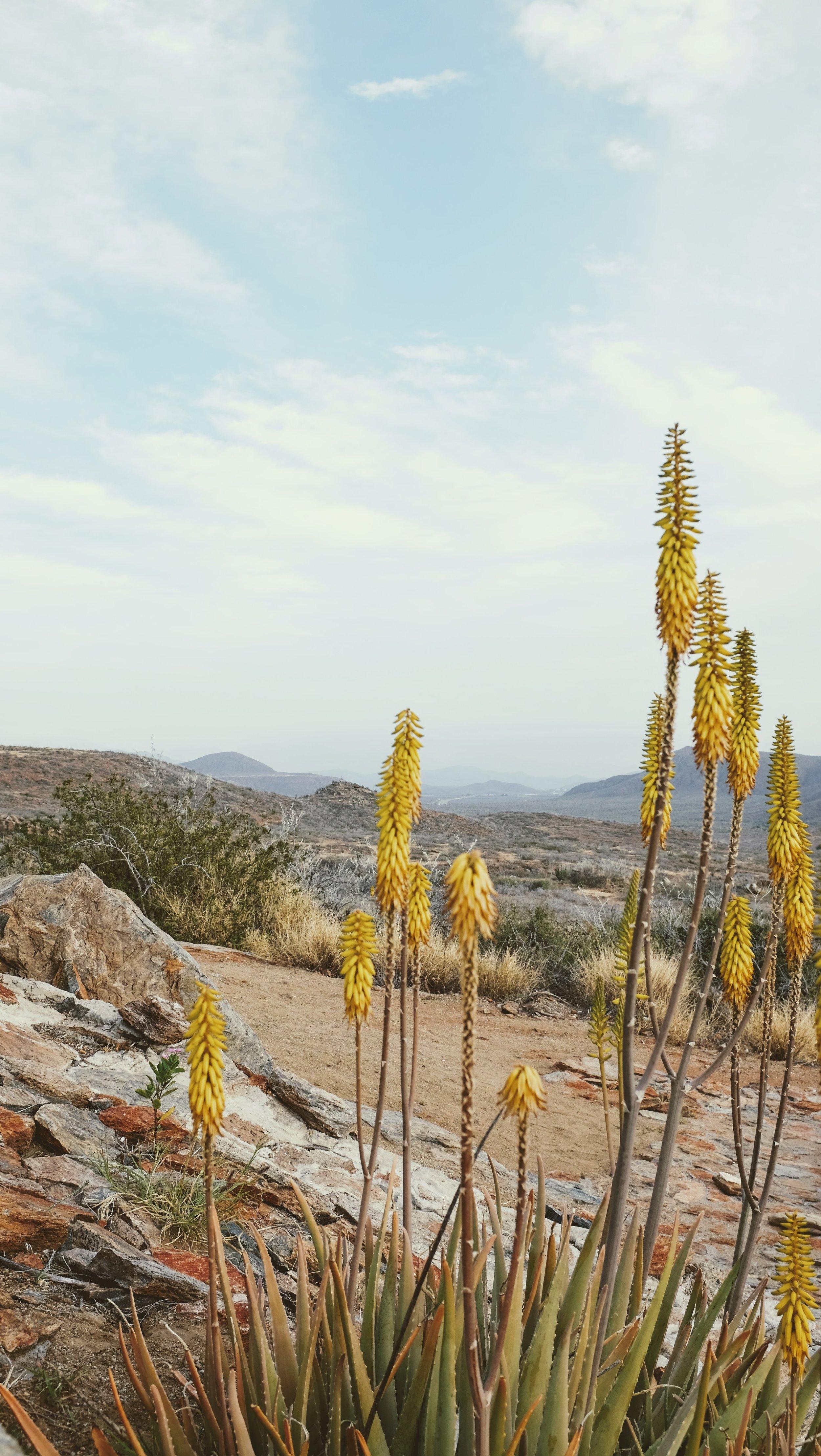 El Mirador Desert View   Todos Santos