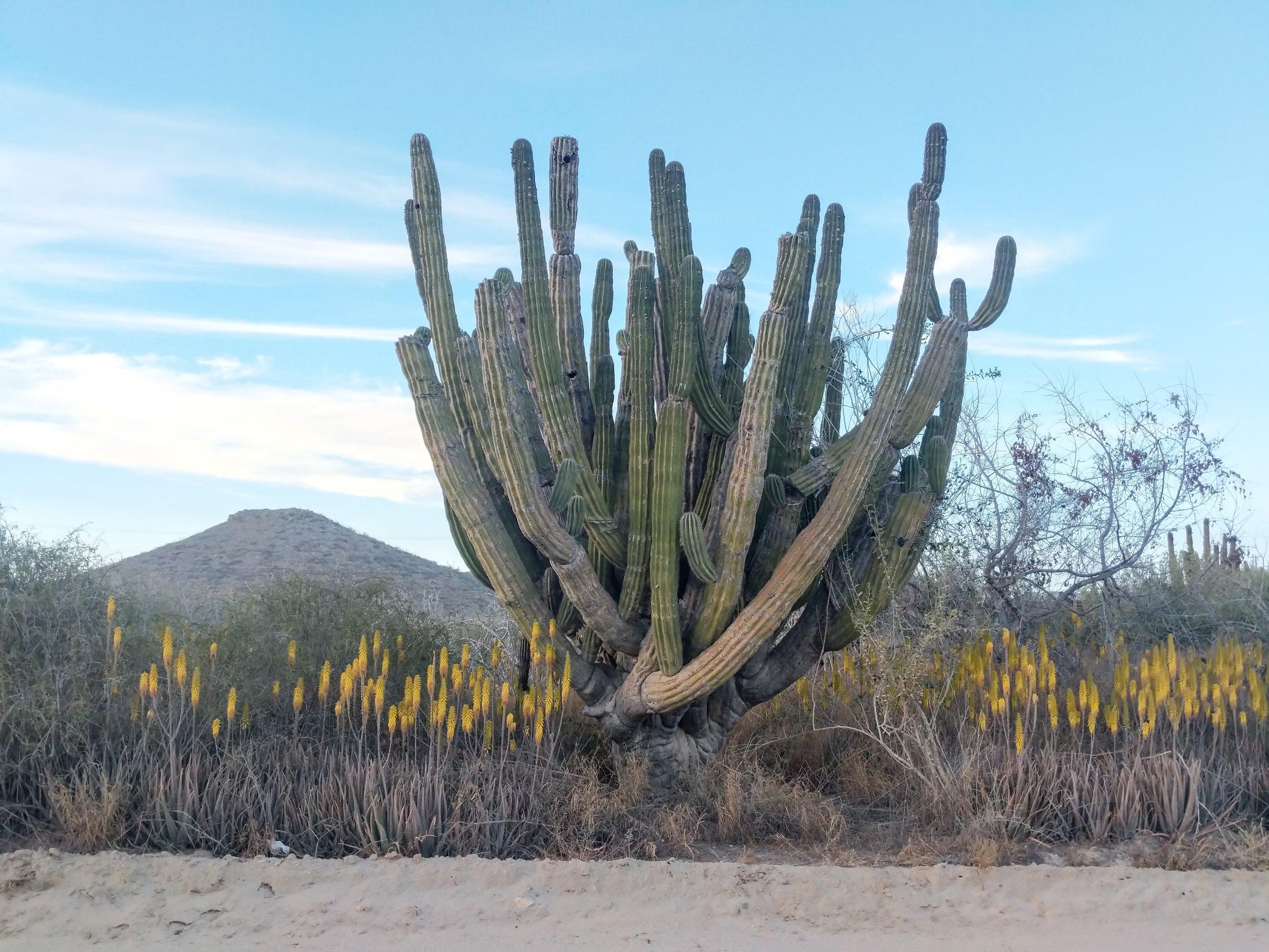 Baja Desert Details