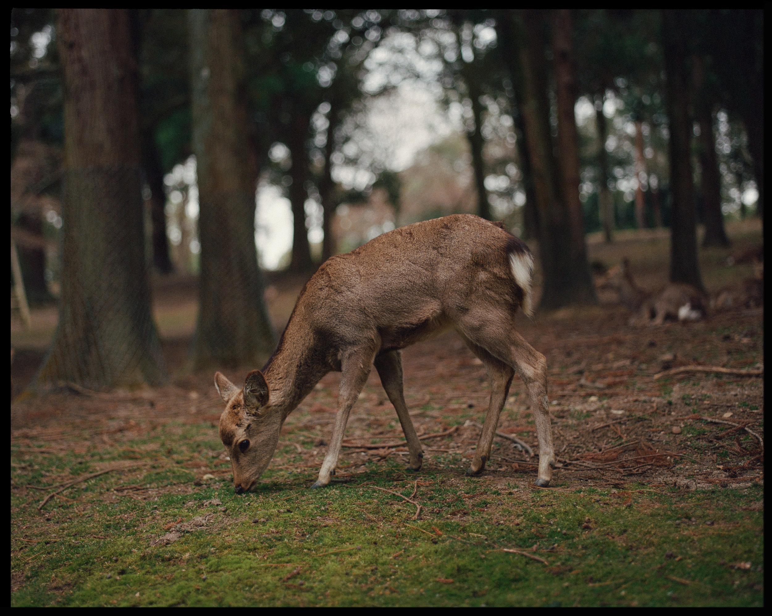 Japan_5_2.jpg