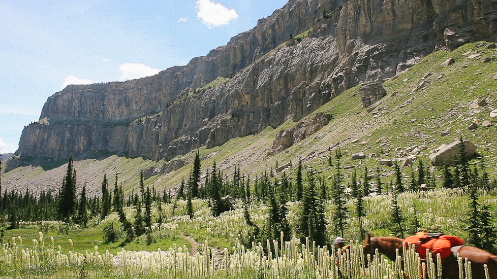 Tall beargrass and the Chinese Wall, Bob Marshall Wilderness, Montana