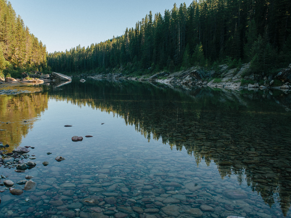 Spruce Park, Great Bear Wilderness  : Artist Wilderness Connection 2012 : Mandy Mohler