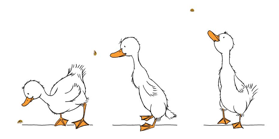 Curious_Ducks_Illustration_STUDIOALSJEBLIEFT