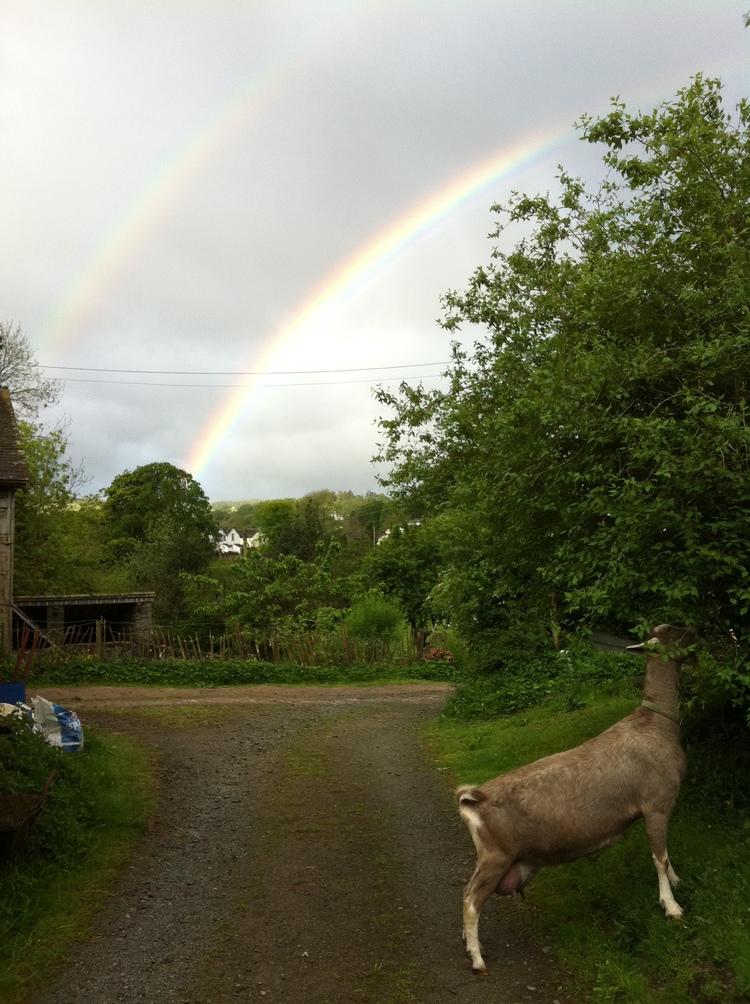 Nanny&Rainbows