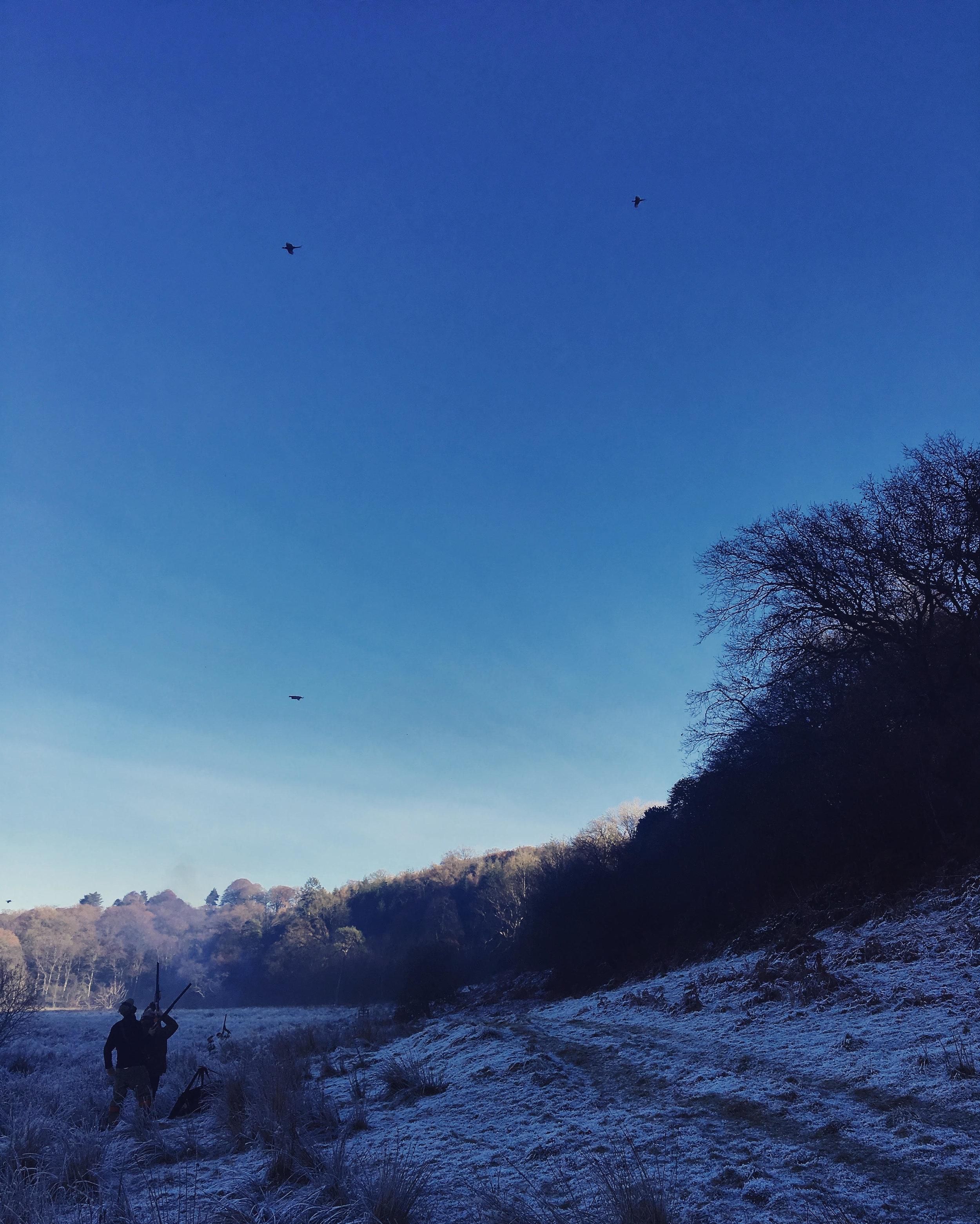 Shooting In Wales, Gregynog