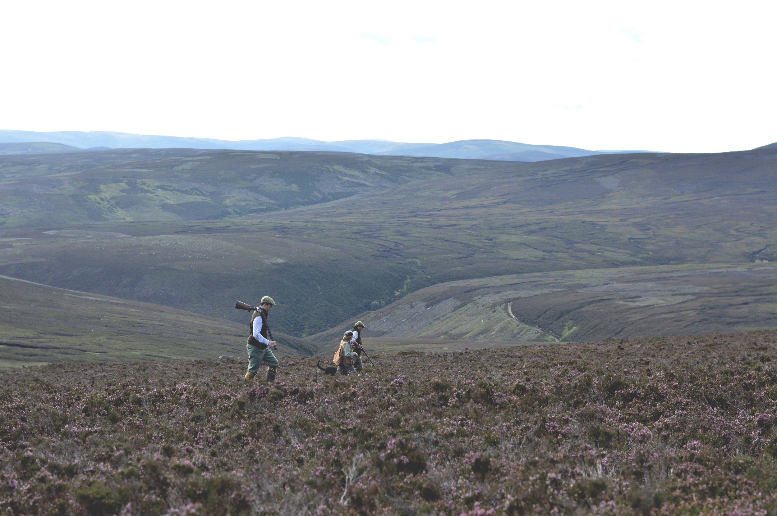 Grouse Shooting Yorkshire