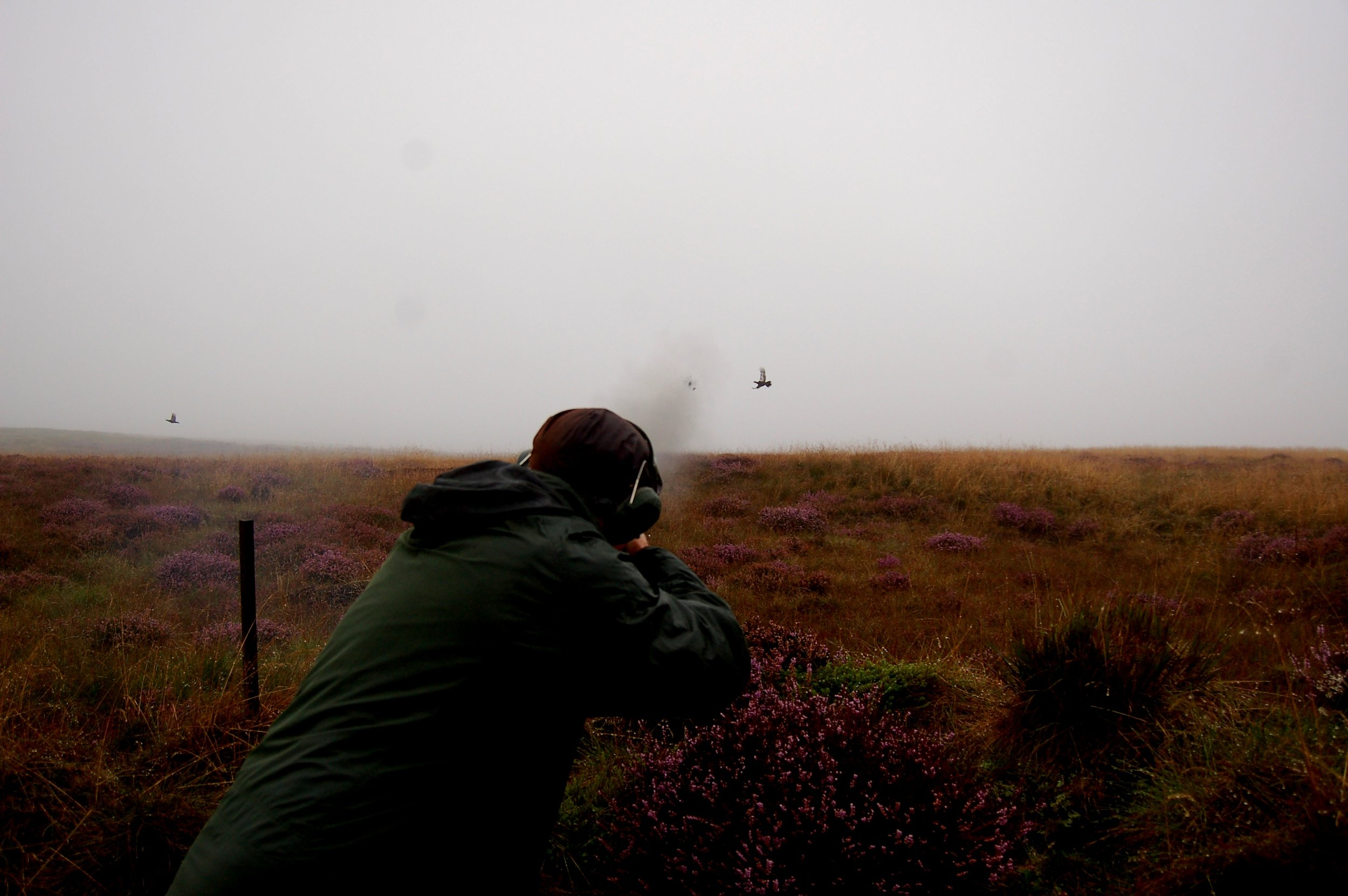 Driven Grouse Scotland