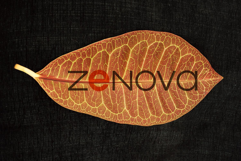 Zenova image.jpg
