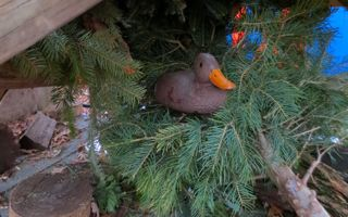 Beneath the trees, another collection began. Bark, chunks of wood, more bricks, and nesting ducks can be found beneath the pile of trees.