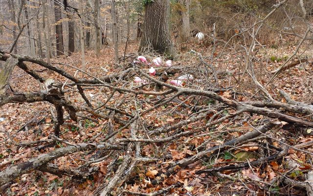 """As the children scrambled deeper into the forest along the """"Giant Fallen Tree,"""" we could see something pink beckoning from the bush."""