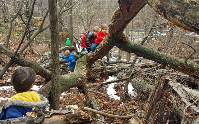 The upper branches of the tree move and even bend. The children have to adjust their gait and navigation to scale them.