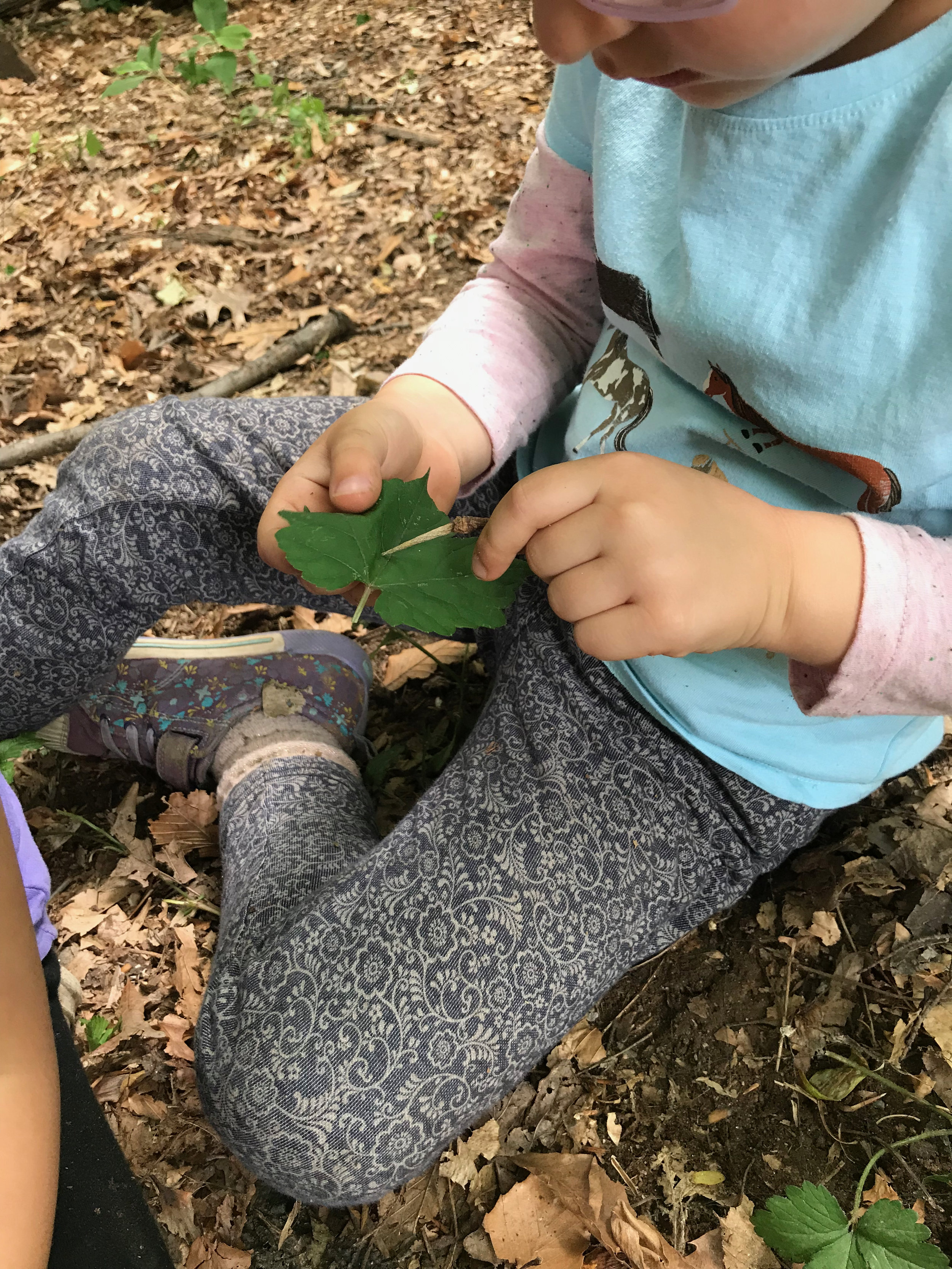 Using a tulip poplar seed pod as a sewing needle.