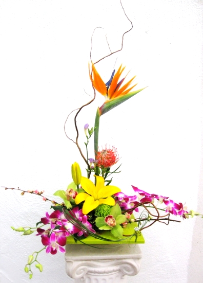 Orchid Explosion, $95 & up