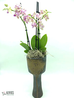 Japanese Ceramic Pottery with Orchid, $150+