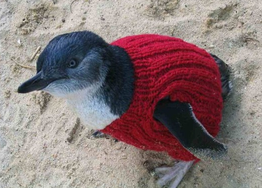Put a sweater on, its cold out there!