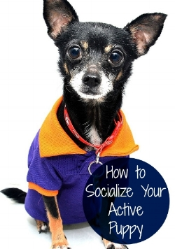 SOCIALIZE-YOUR-ACTIVE-PUPPY.jpg