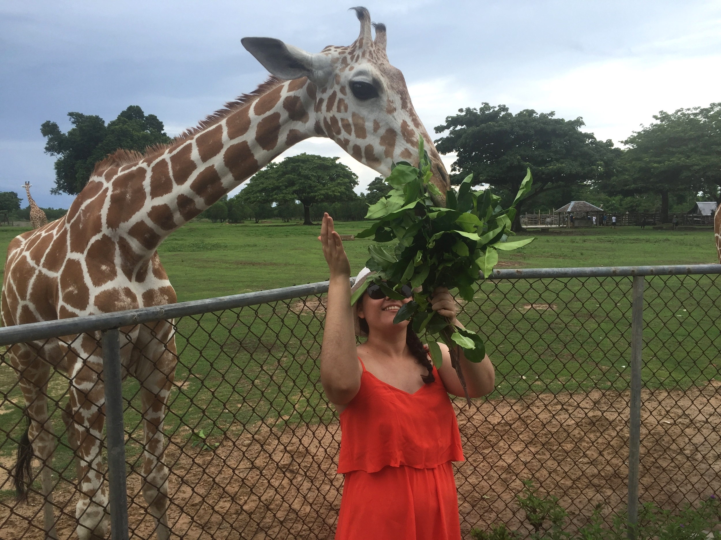 to see Giraffes !!!! and other wildlife at the Safari Park on the island.