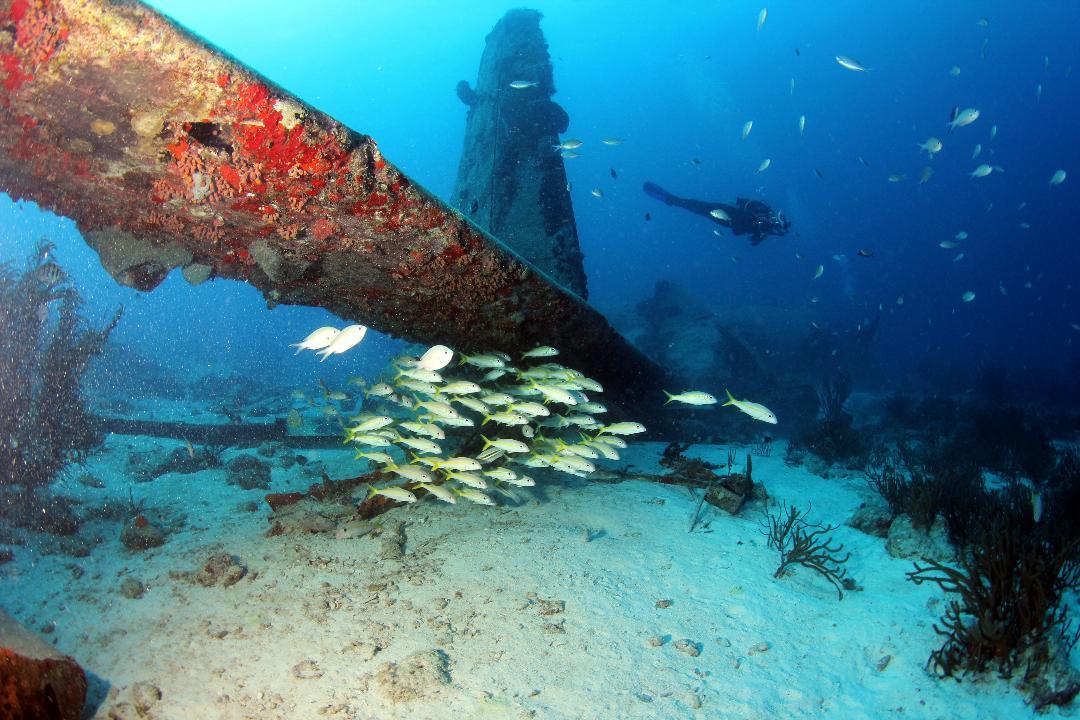 Aruba3.jpg