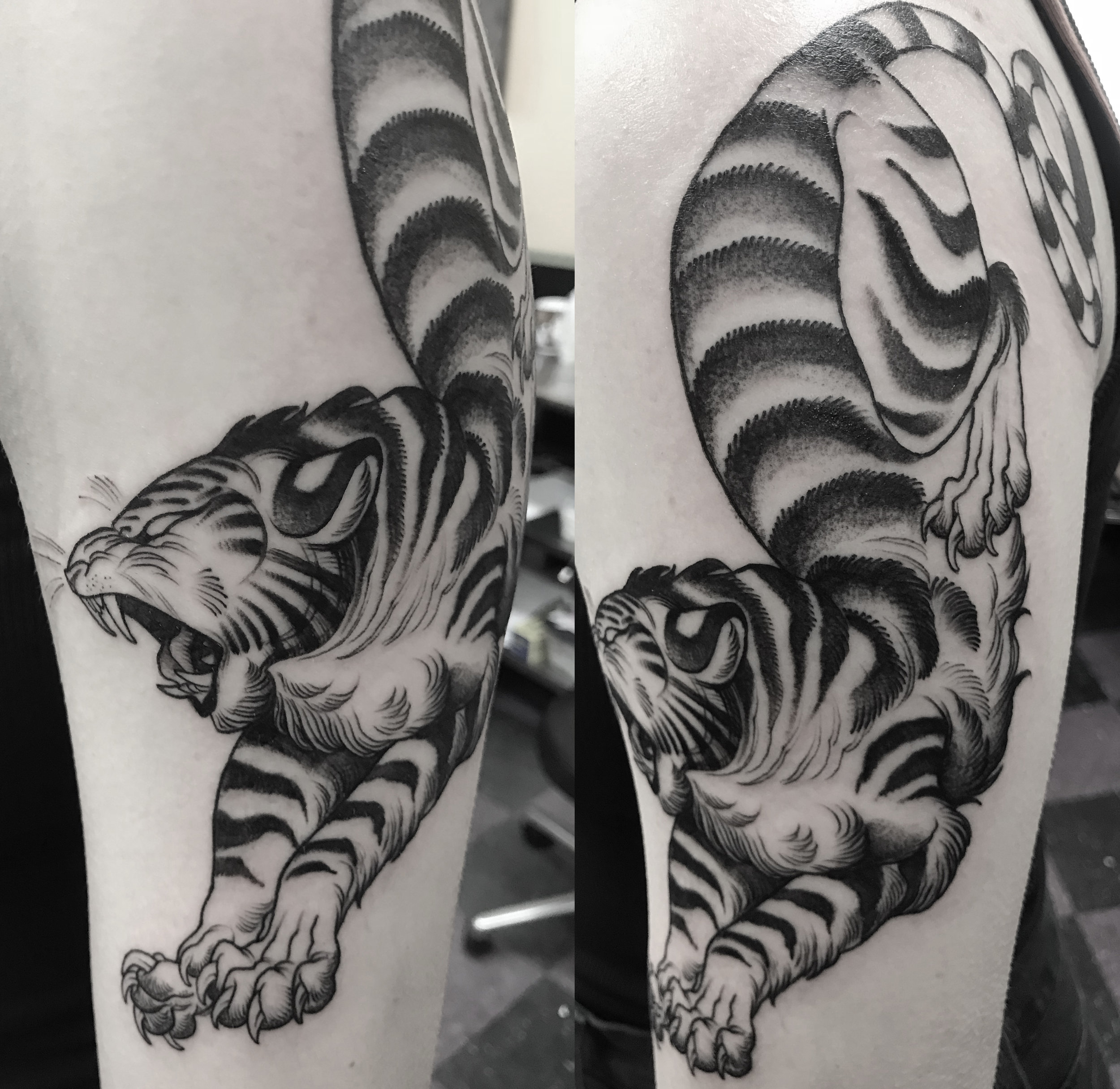 tiger_may.jpg
