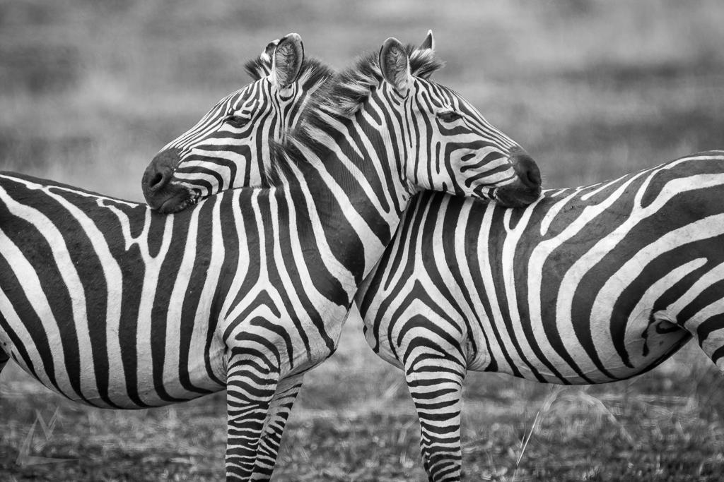 20150731_Masai_Mara_375-1.jpg