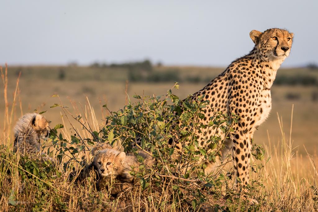 20150804_Masai_Mara_1817-1.jpg