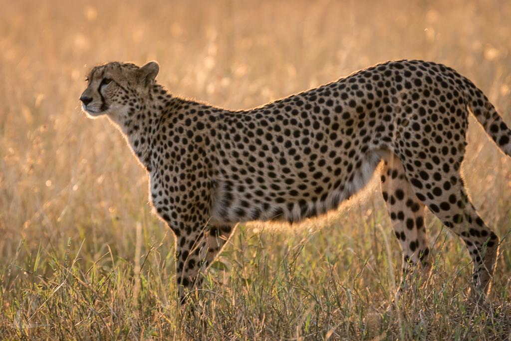 20150804_Masai_Mara_1819-1.jpg
